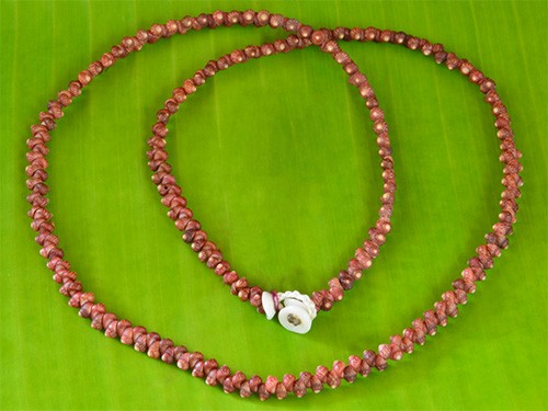 Kahelelani Shell Necklace